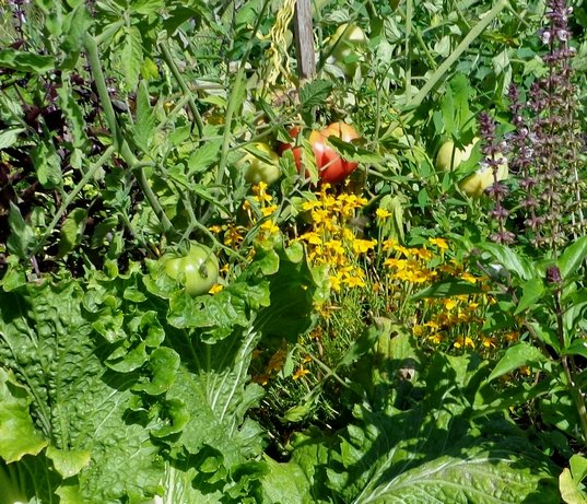 Atelier Pour un jardin fertile... naturellement, samedi 6 avril dans A quand la Guadeloupe sans pesticides ? un-jardin-fertile