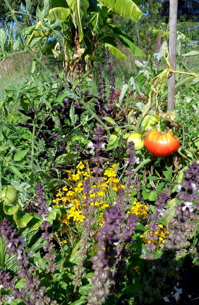 Après midi Jardin partagé et agriculture naturelle, mercredi 24 avril dans le jardin extraBIOrdinaire association-fertile