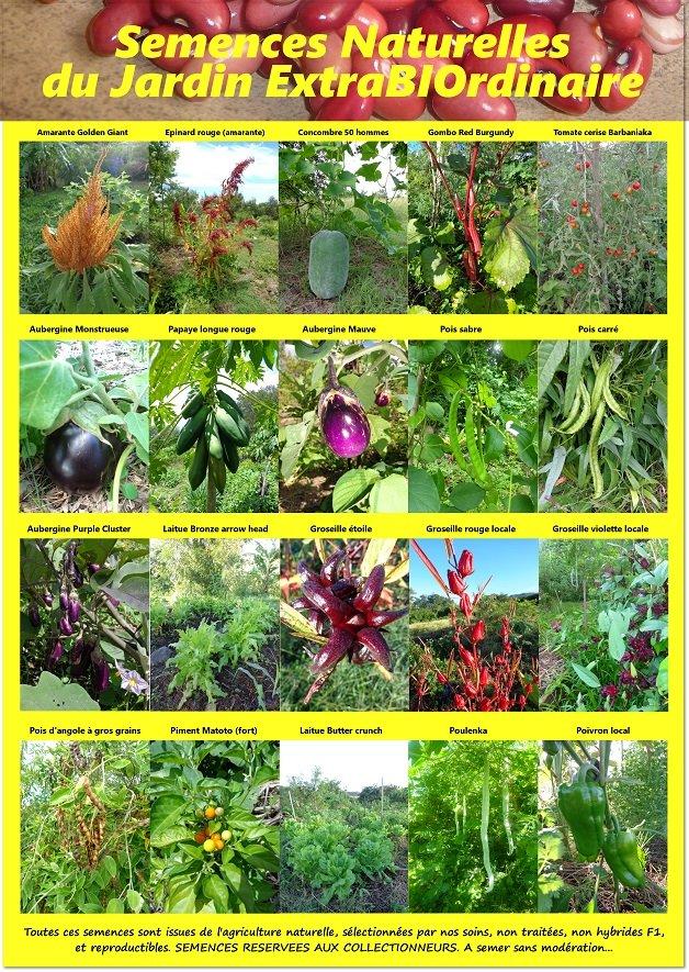 affiche semences naturelles