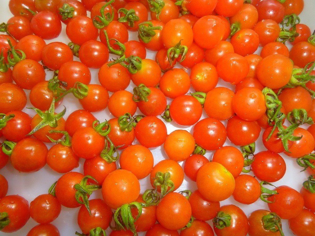 tomates barbaniaka