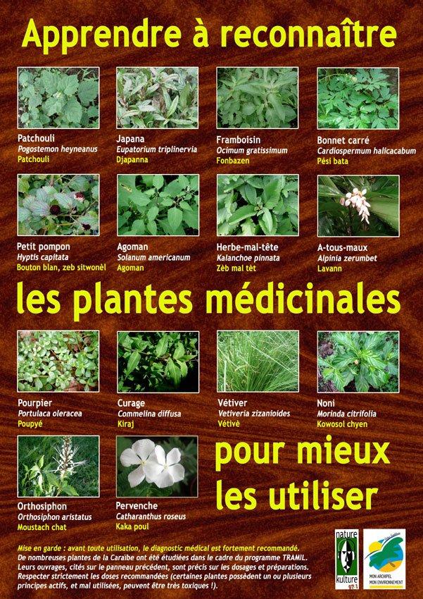 panneau-plantes-2