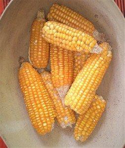 epis maïs
